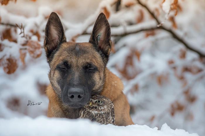 dog and owl Ingo Tanja