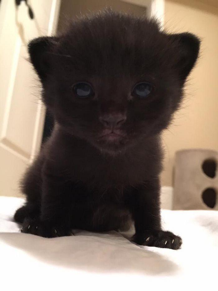 mini panther 5