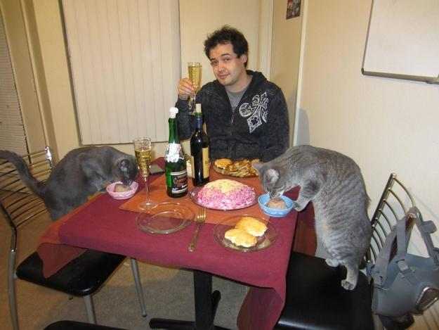 cat dinner date 3