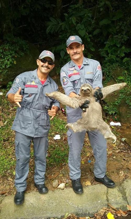 firemen rescue sloth