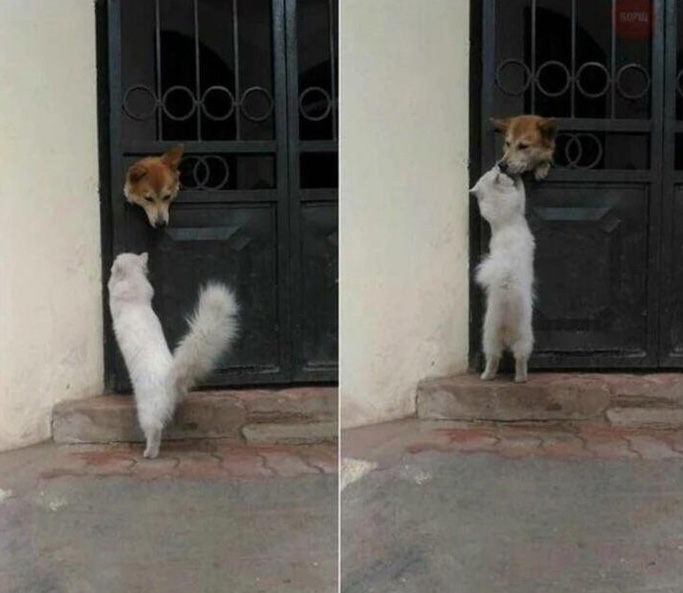 cat visits dog every day to give kiss