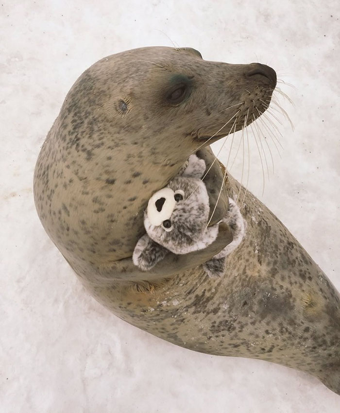 seal toy hug