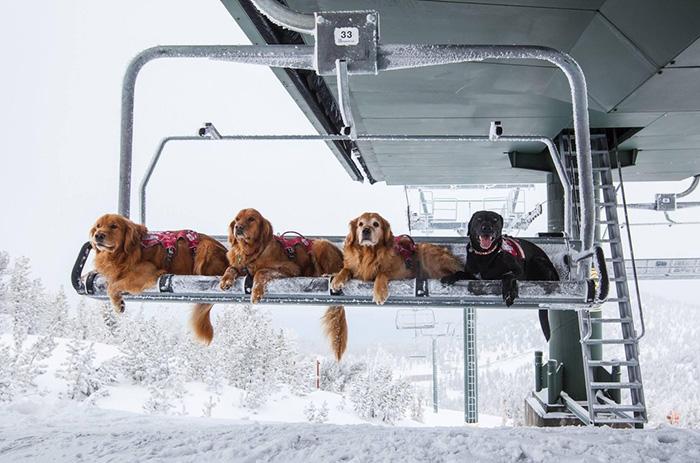 ski patrol dogs