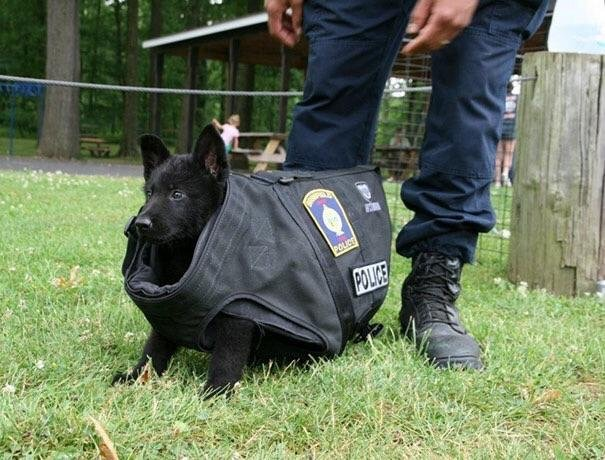 k9 puppy first day on the job