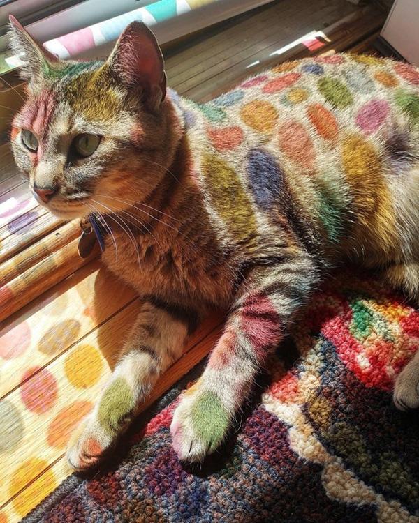 dr seuss cat
