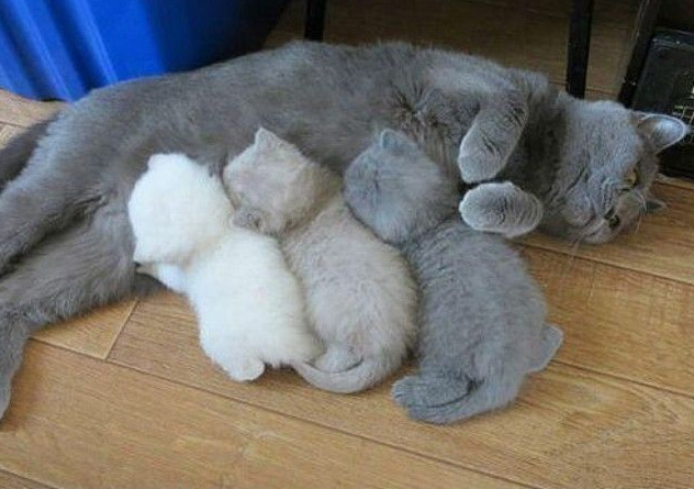 kitten printer running out of ink