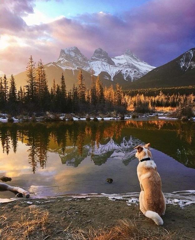 truly stunning dog mountains river sunrise