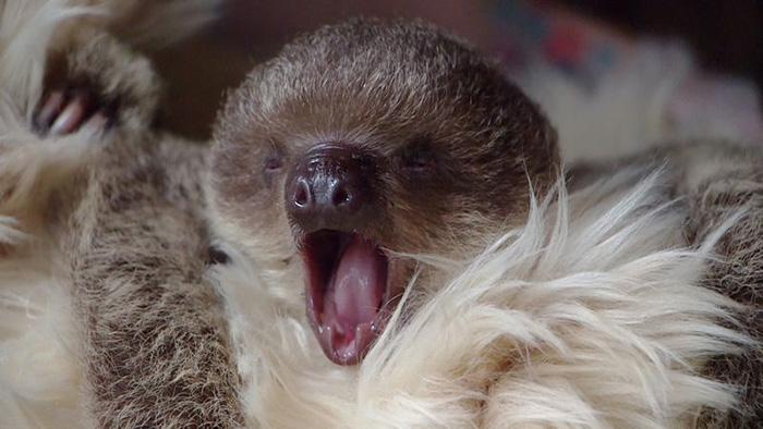 sloth sleepover