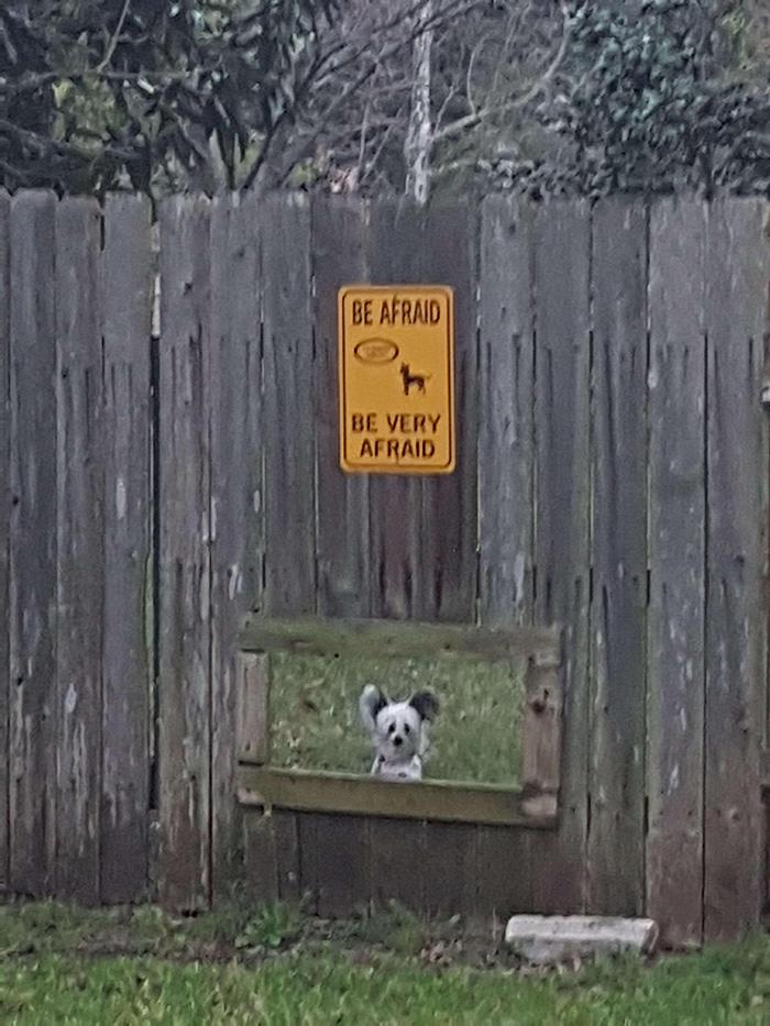 dog window in fence funny afraid sign