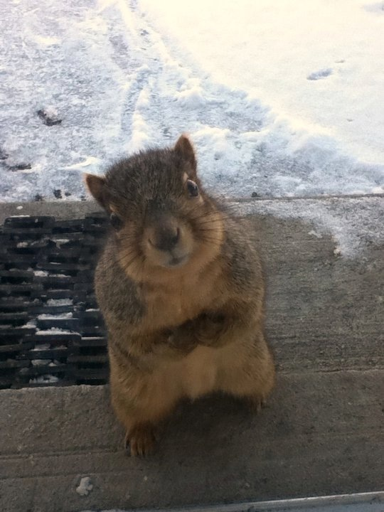 squirrel begs for peanuts