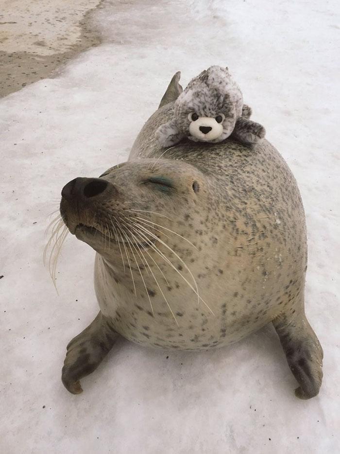 seal toy hug