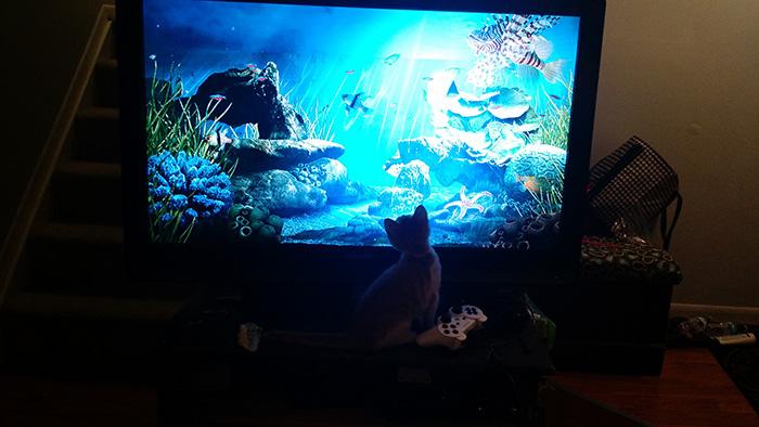 kitten rescue from trash story