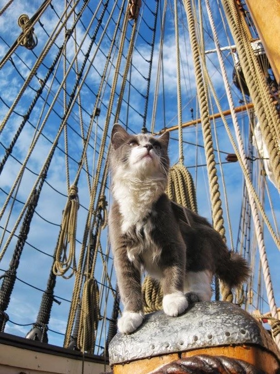 captain cat sparrow