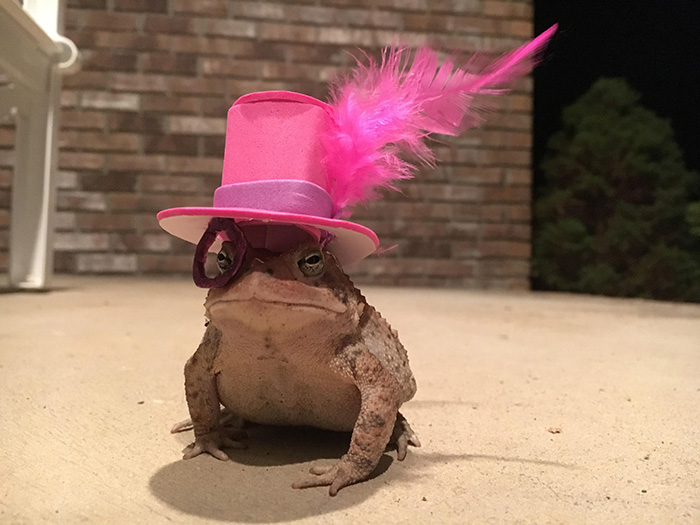 woman makes hat for porch toad