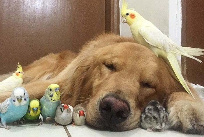 proof dogs can be friends with anything