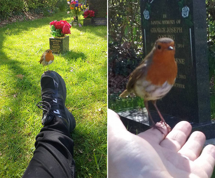 How Robins Prove Loved Ones Are Still With Us After Death