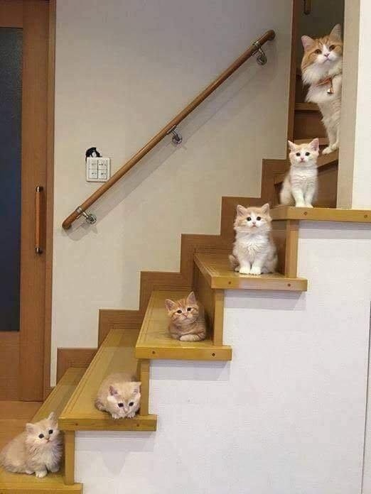 High Quality Cat Stairway Family