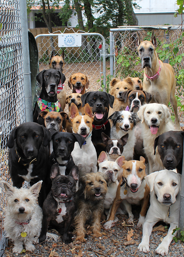 best doggy daycare photo ever