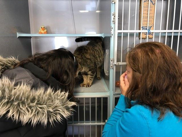 woman finds missing cat shelter 2 years later good news