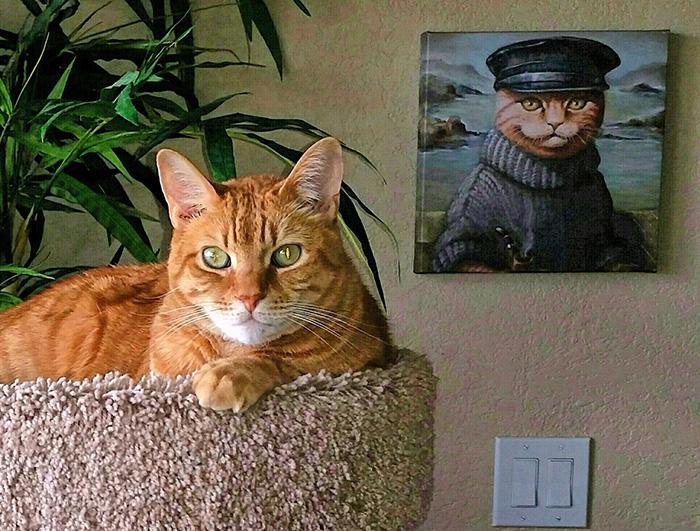cat looks like grand dad