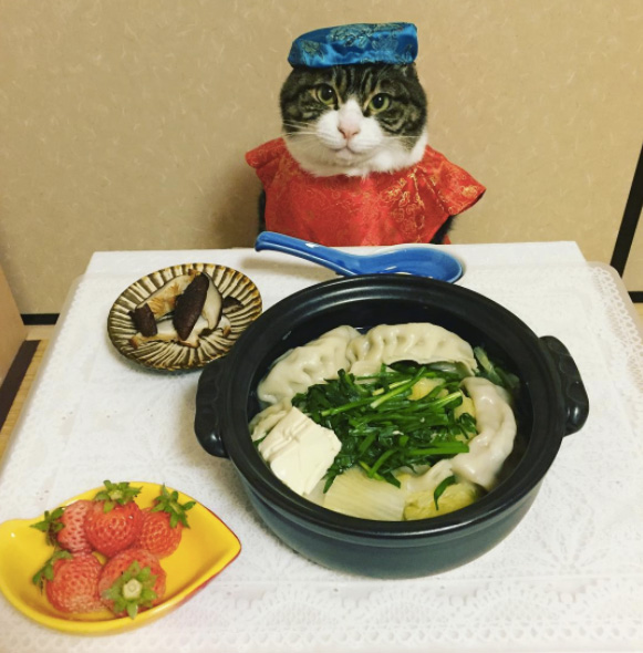 cat dresses up with mom for dinner every night Japan Maro