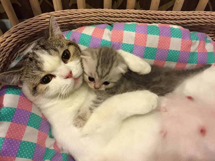 cute kitten with mama cat