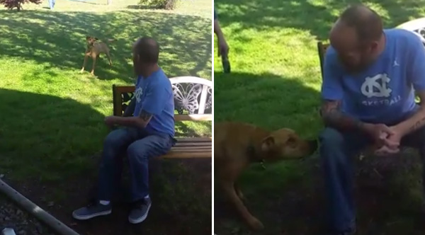He Lost So Much Weight His Dog Didn T Recognize Him Then