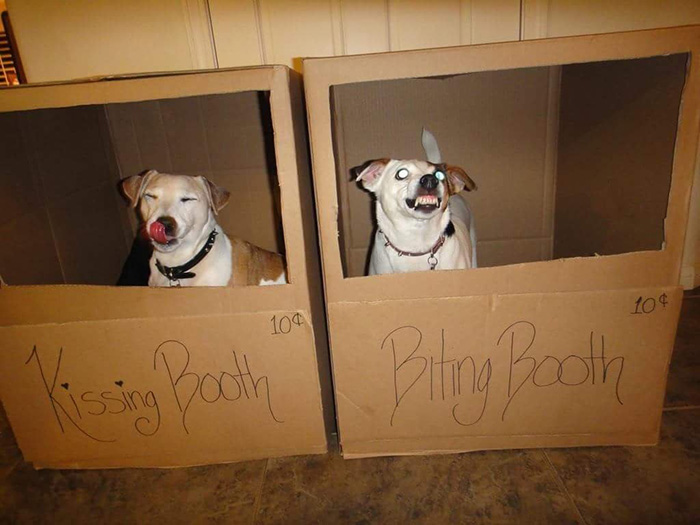 kissing booth biting booth dog photo funny