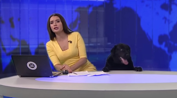 dog surprises news anchor Russia