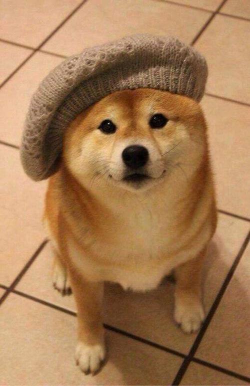 french painter dog