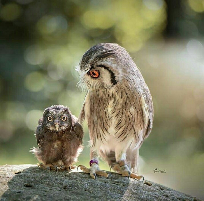 when you say a bad word in front of mom owls