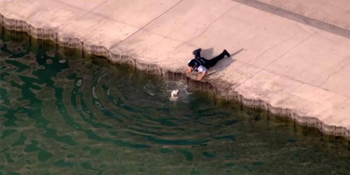 hero cop saves dog drowning in lake Michigan