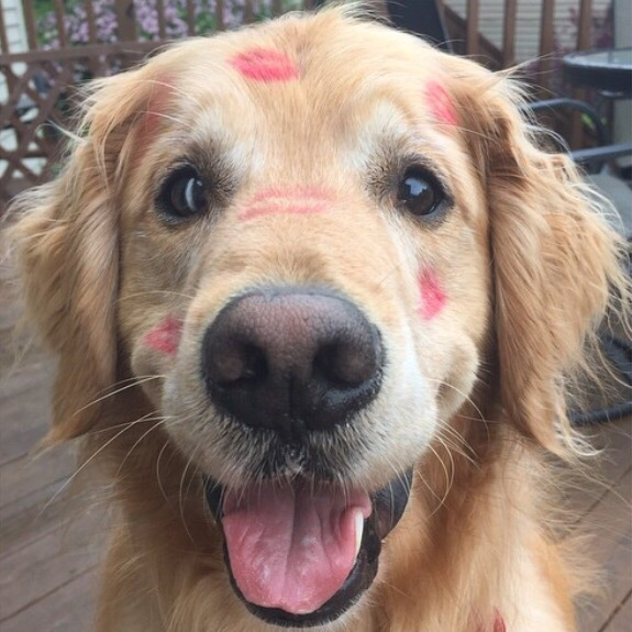 dog with lipstick kisses all over