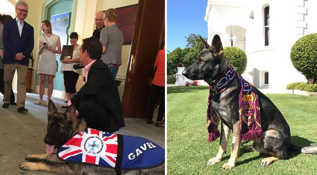 gavel police dog gets fired new job