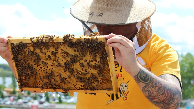 beekeeping helps the homeless