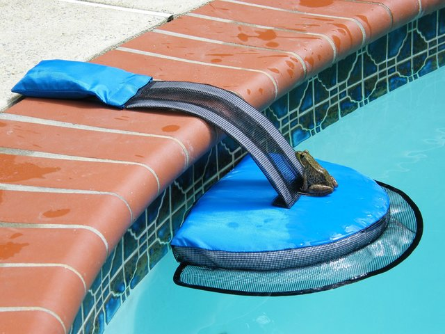 invention saves animals from drowning in pools