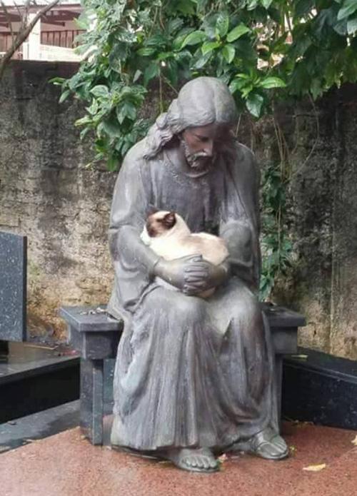cat naps with Jesus