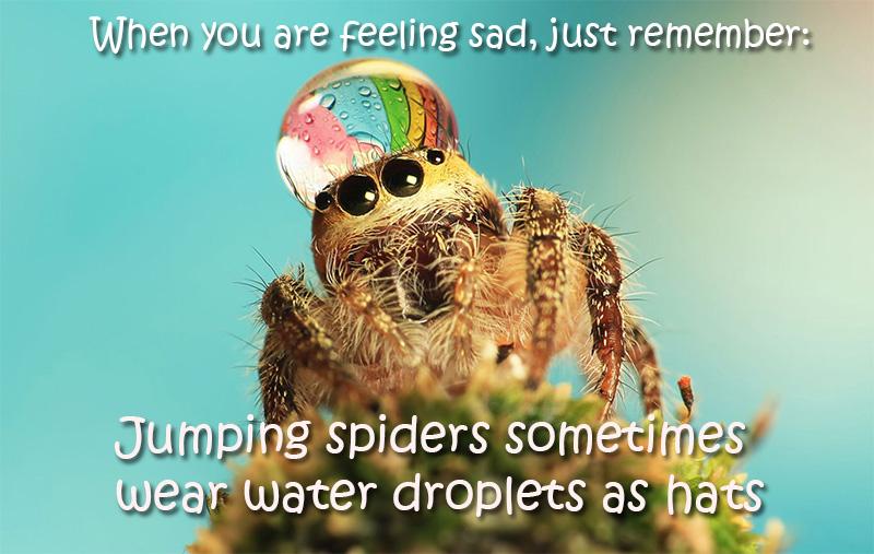spider water hat