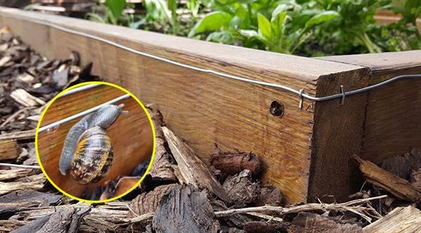 How To Make A Mini Electric Fence To Keep Slugs Out Of Your Garden Beds