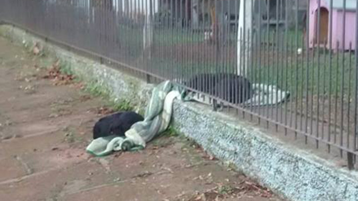 dog puts blanket on stray dog