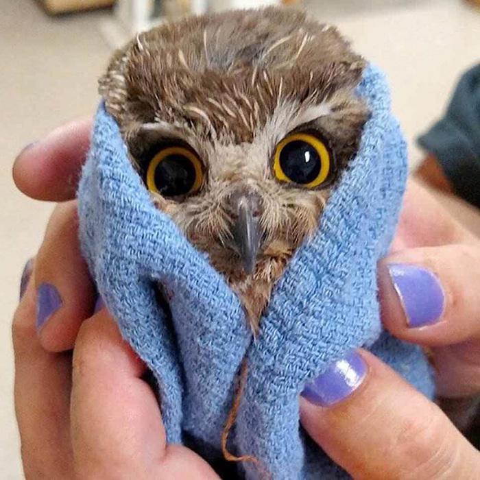 moist owlette