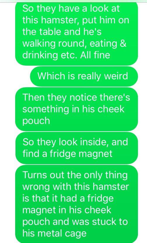 hamster funny story magnet vet