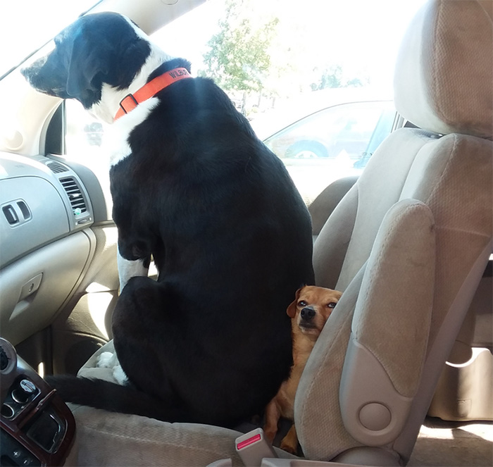 debate for the front seat dogs