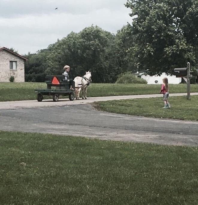 amish boy visits little girl with horse and cart