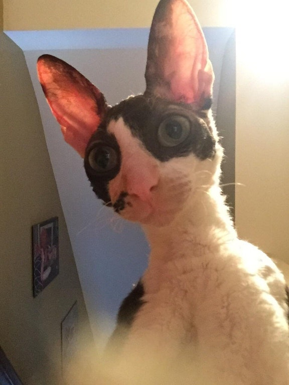 cat takes selfie by accident