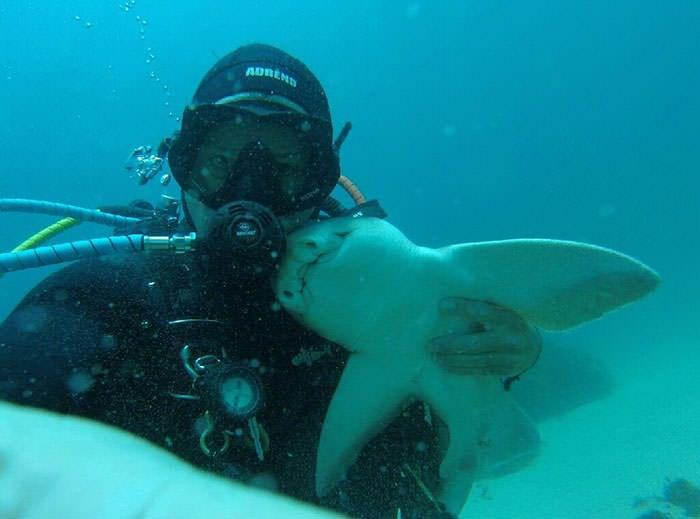 shark cuddles diver