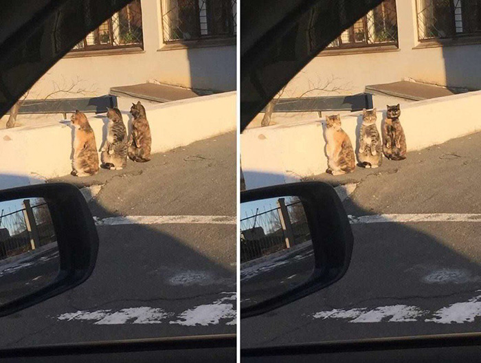 cats up to something