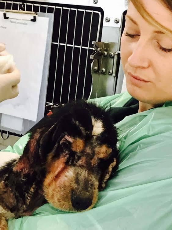 help wanda dog rescue news