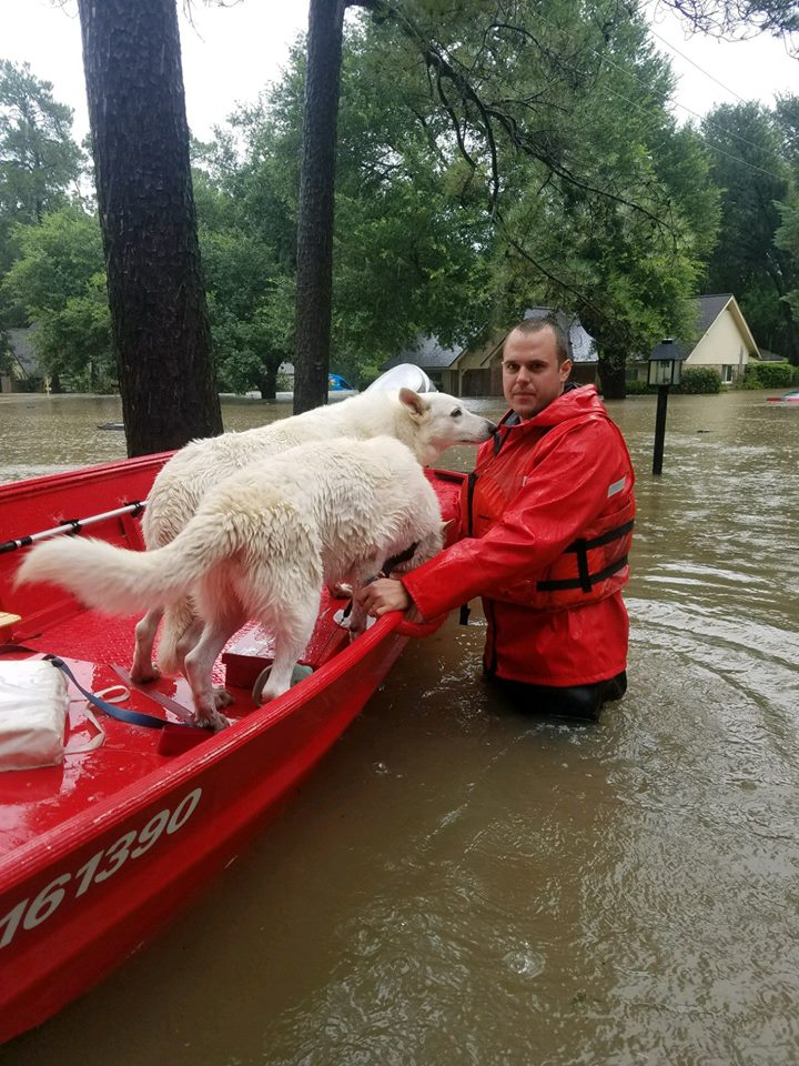 people saving animals from flood
