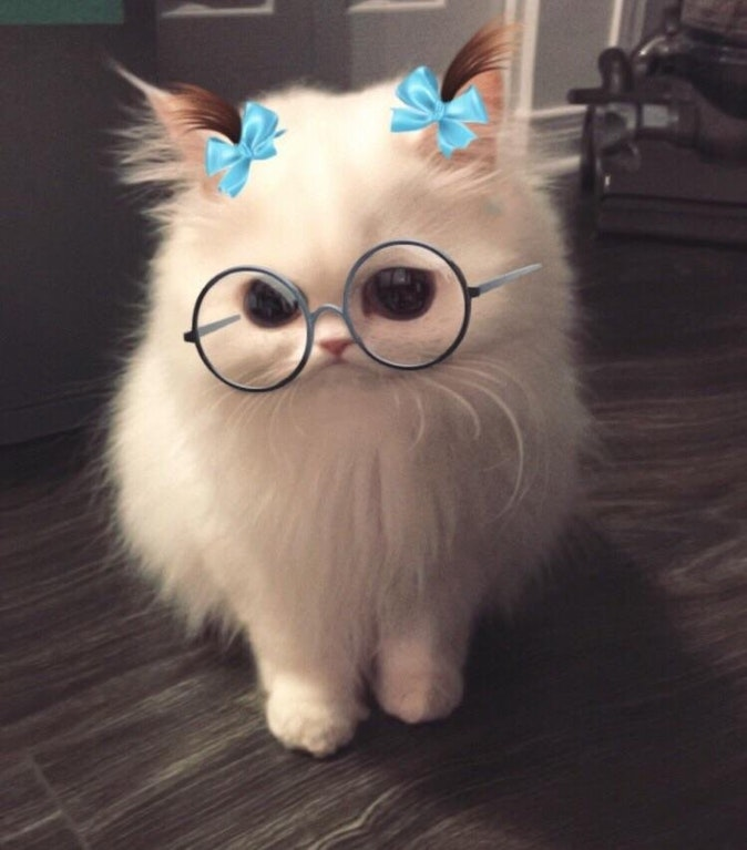 snapchat filter on a cat